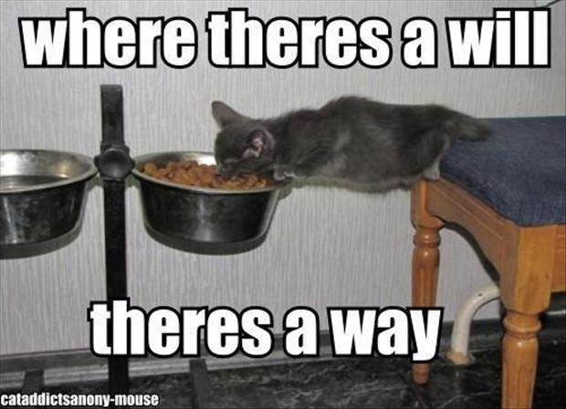cat-eating-food-funny-pictures