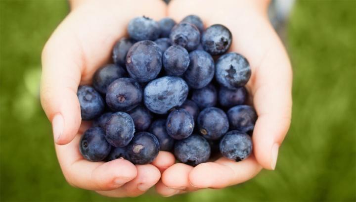 handful-of-blueberries-1502